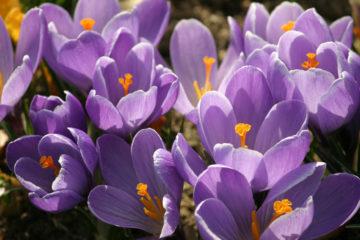 Wielkanoc i Majówka – zmiany w planie